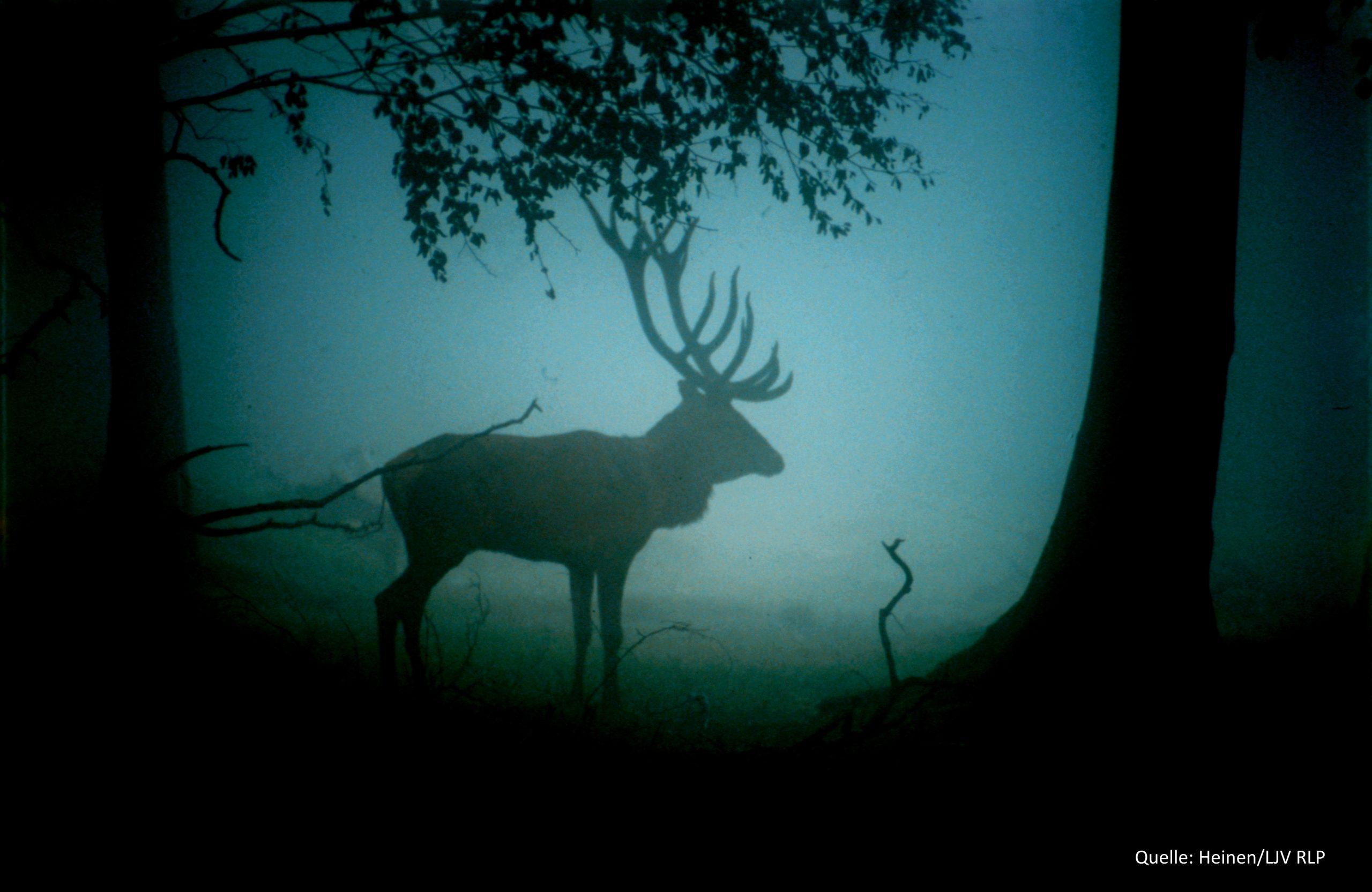 Hirsch im Nebel