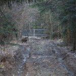 Frischling im LJV-Saugatter Hunsrück
